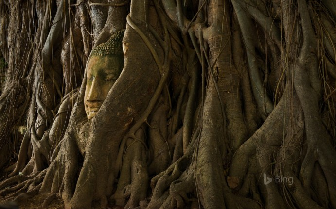 A statue of a Buddha head in the roots of a tree, Ayutthaya, Thailand